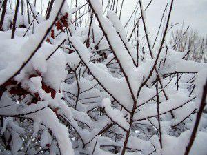February Snow!