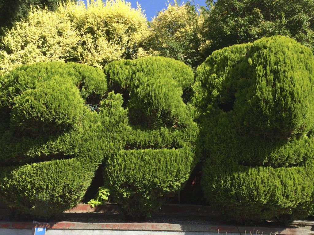 faces in the shrubbery